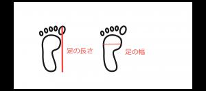 足の長さと足の幅